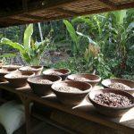 Kopi Bali Prosesing