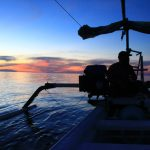 Menengok Wisata Dolphin Di Bali Yang Pastinya Sangat Seru
