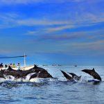 Paket Travel Lengkap Guide Dolphin Lovina