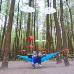 Hutan Pinus jogja 1