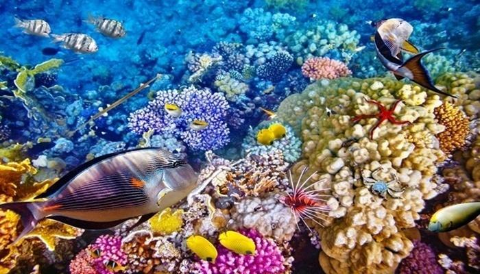Keindahan Laut Pulau Menjangan