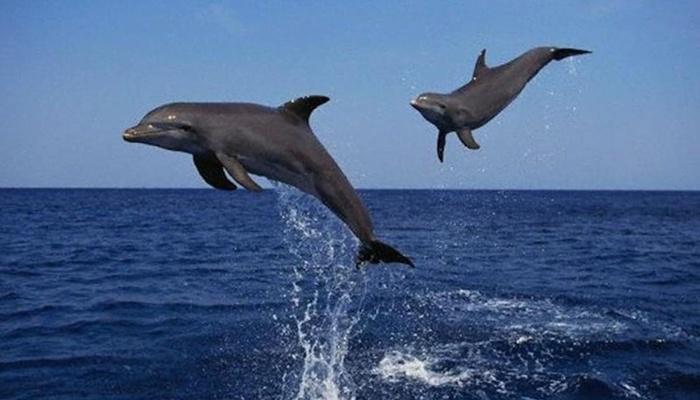 Tiket Dolphin Lovina 5
