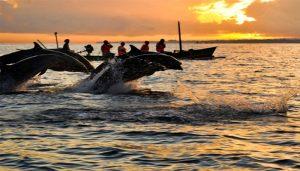 Tiket Dolphin Lovina 6