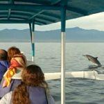 Sewa Perahu di Lovina Untuk Melihat Dolphin bersama nelayan Kalibukbuk