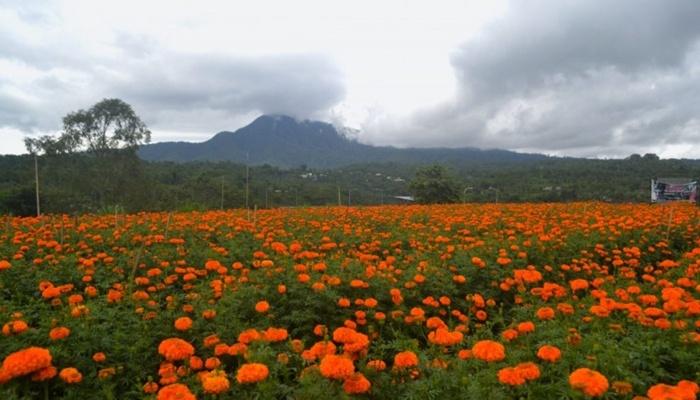 Gemitir Garden Bali